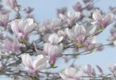 Flowers and Textures (Imagine 2) poszter - Magnolia