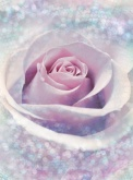 Flowers and Textures (Imagine 2) poszter - Delicate Rose