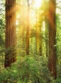 Into Illusions 2 poszter - Redwood